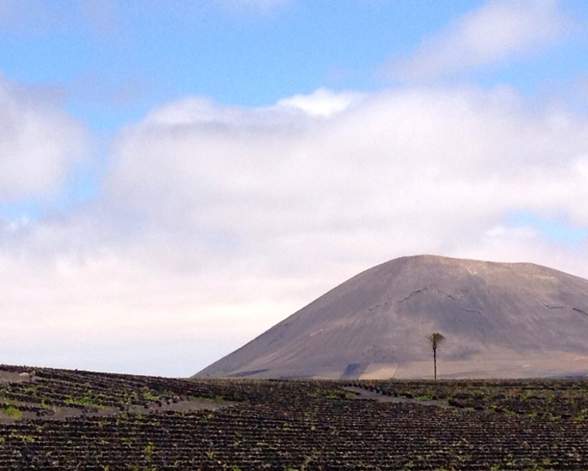 Paisaje agricultura de Lanzarote